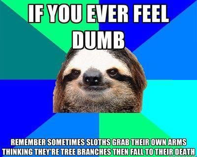 animals-memes-sloths-for-whenever-you-feel-dumb